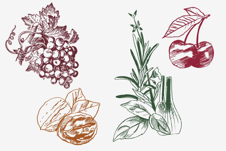 Hercegovinavino mediterano rakije dizajn etiketa ilustracije