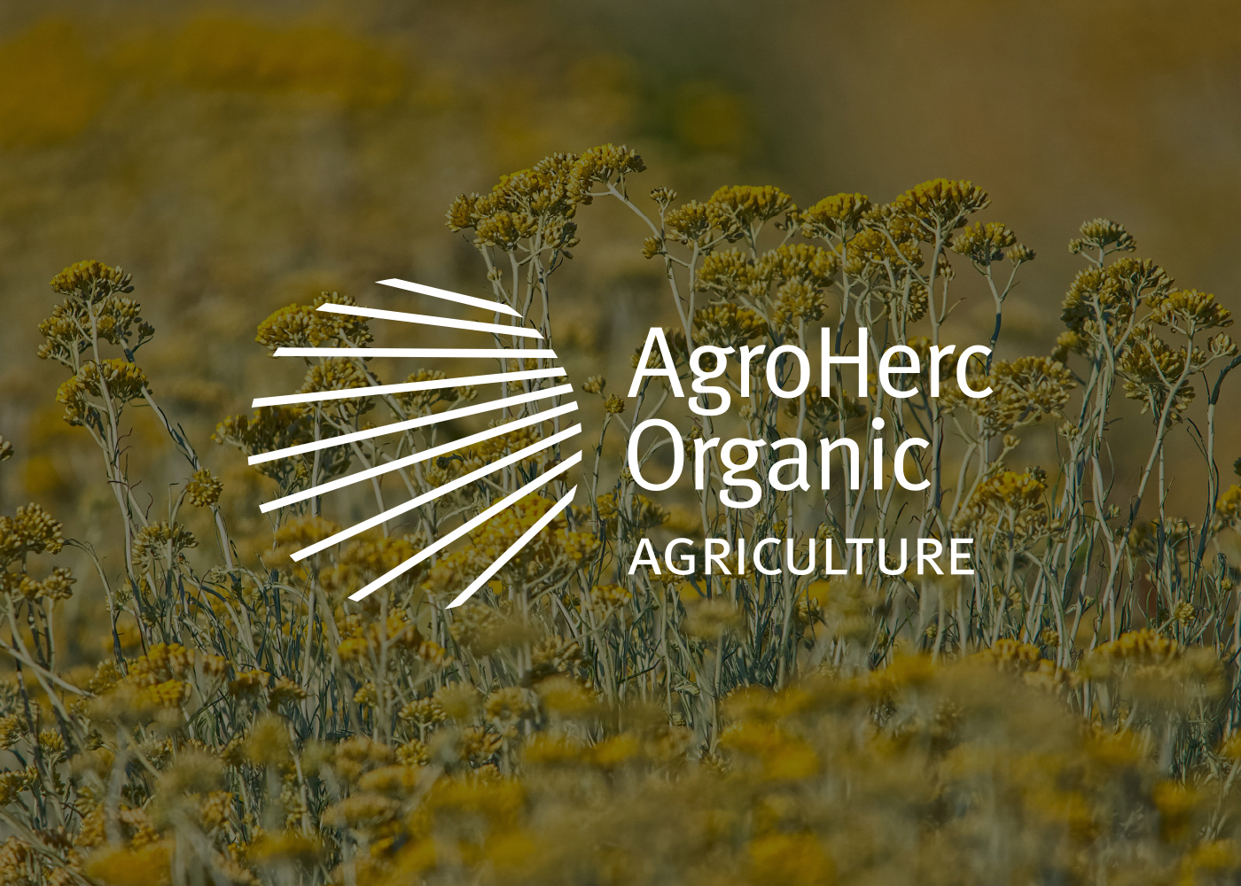 Visual Identity Design for the Largest Organic Agricultural Producer in Herzegovina